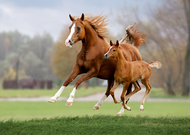 Pharmox Paard & Pony Glucosamine